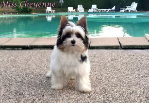 Miss cheyenne